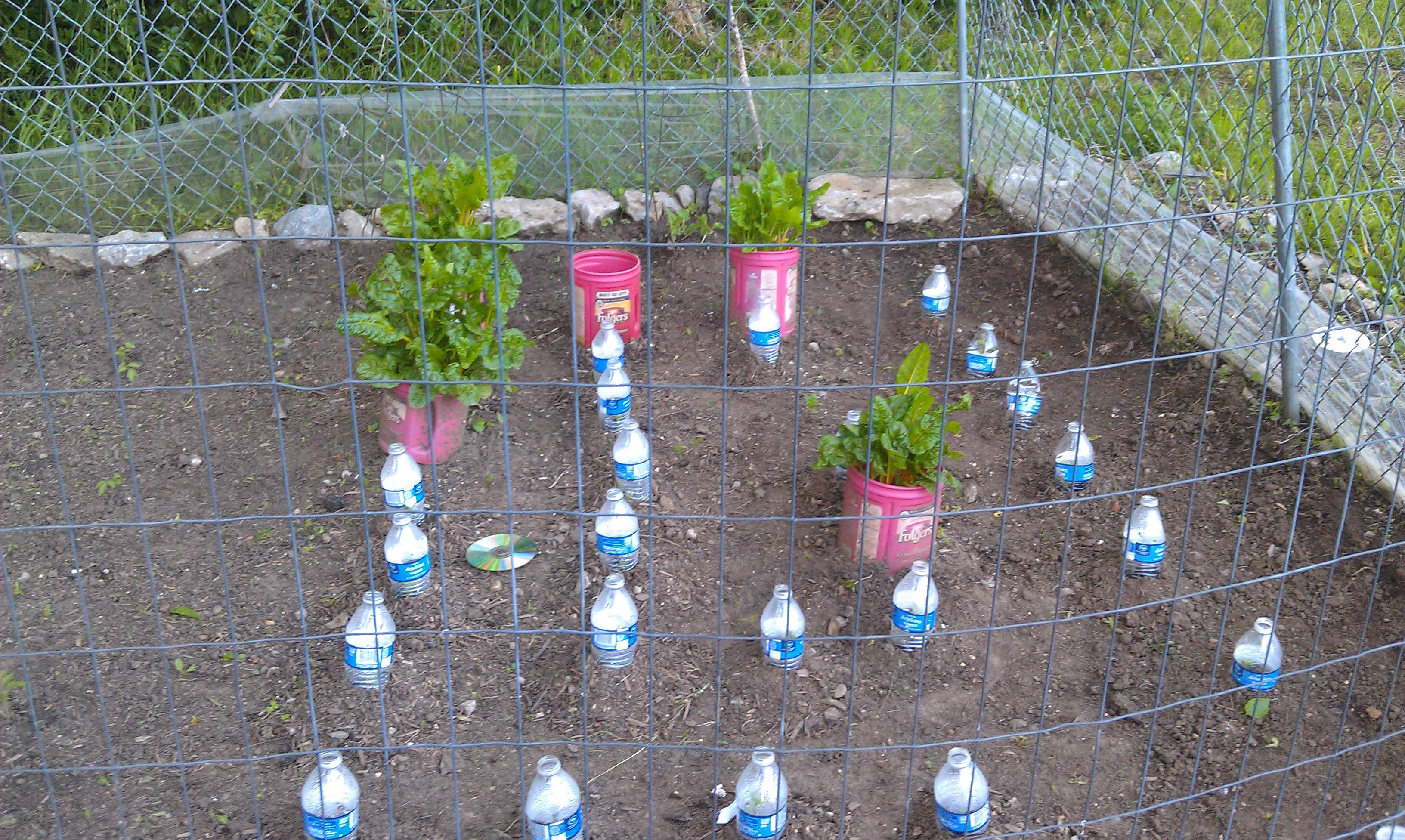 Natural Vegetable Garden Tips And Tricks RedLipstickReviews